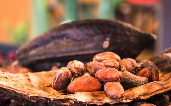Image of cacao